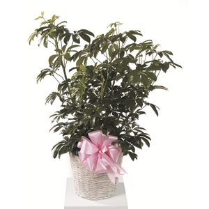 Sympathy and Funeral Flowers for the Home Nature's Treasures Florist on plants to send for sympathy, plants for funeral service, plants for cemetery, plants given at funerals, plants for church, plants sent to funerals, plants for a funeral,