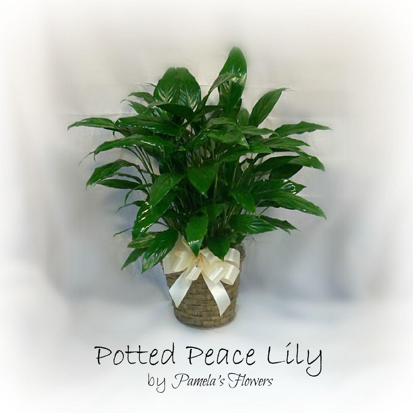 Pamela\u0027s Flowers & 6\