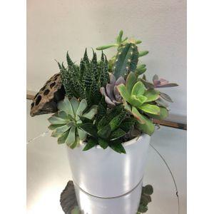 Succulent Treat in Cohasset MA, Paul Douglas Floral Designs