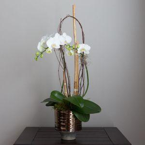 Orchid - Double Stemmed in Atlanta Georgia, Petals A Florist