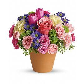 Summer flowers stittsville on k2s 1b8 florist pretty pots flower shop spring splash mightylinksfo