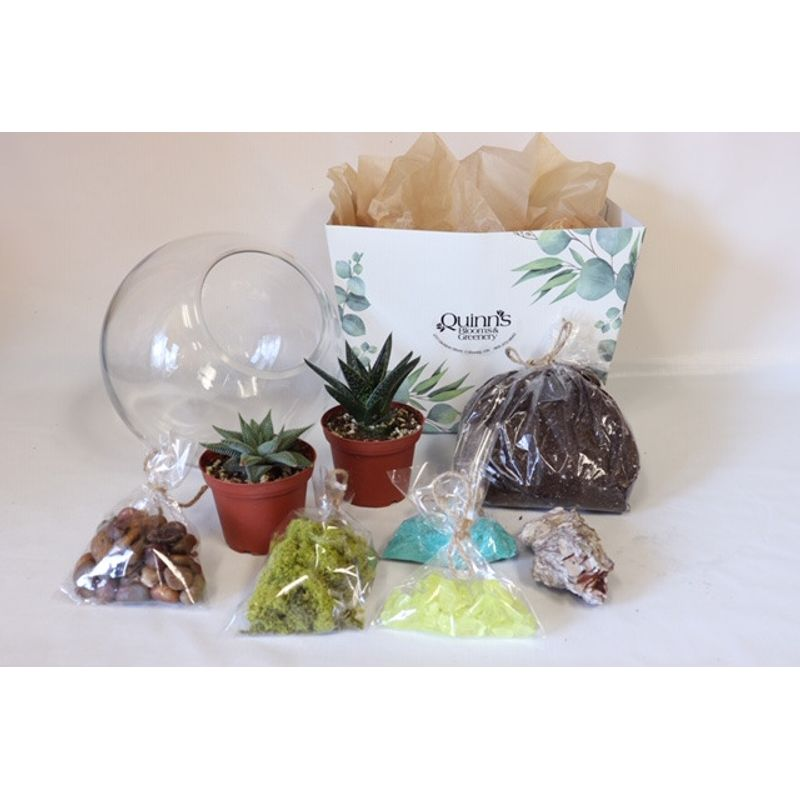 Diy Terrarium Kit Quinn S Blooms And Greenery Cobourg On Florist