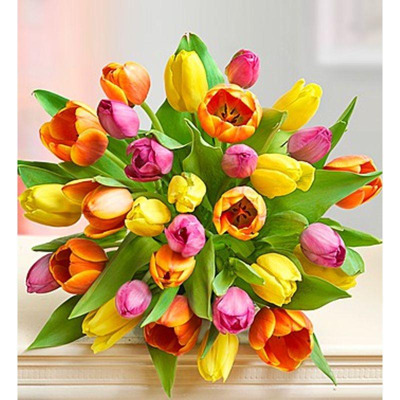 Mothers Day Tulips Backyard Garden Florist Roseboro Nc