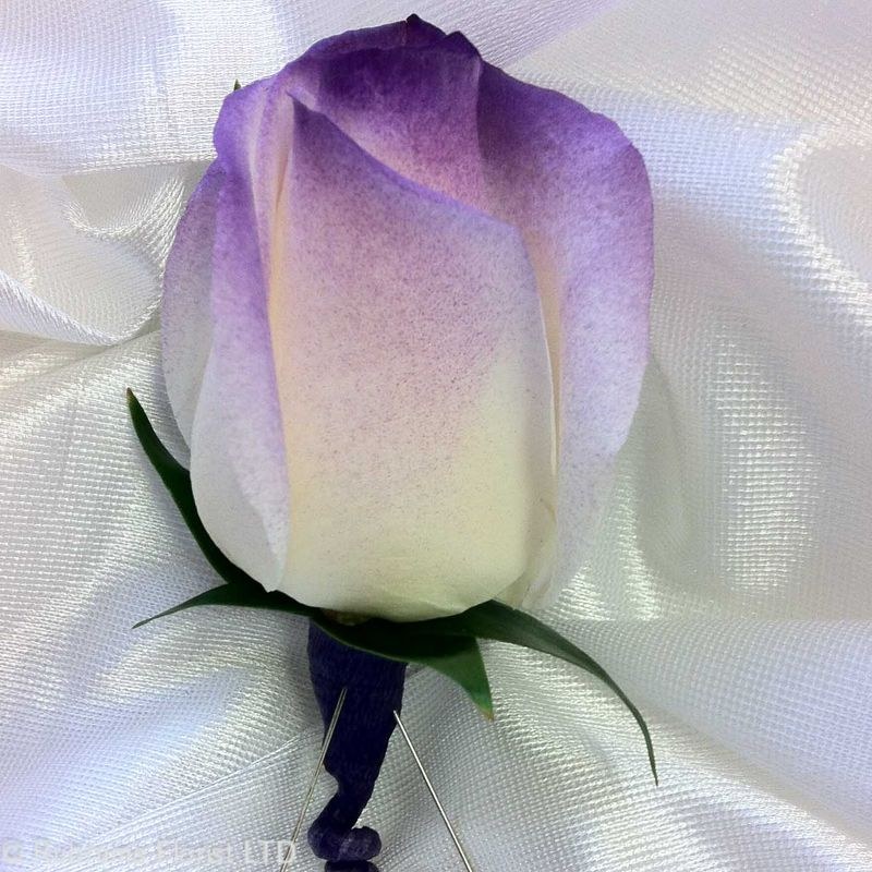 White rose w purple tip boutonniere rubrums florist ossining ny more views mightylinksfo