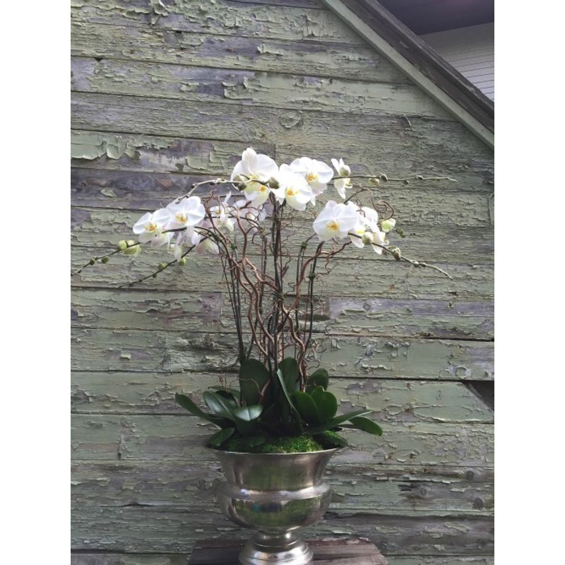 White Potted Orchids In Silver Vase Millerton Ny Millbrook Ny