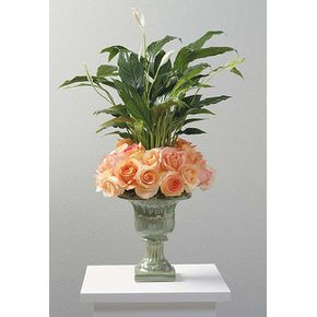 Sympathy and Funeral Special Items West Babylon Florist