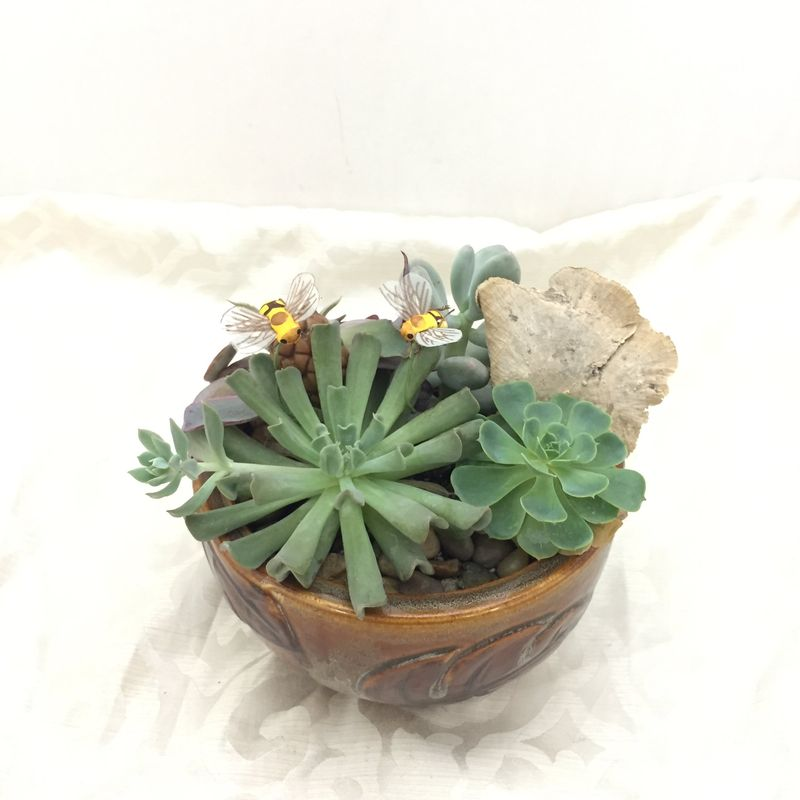 Small Succulent Ceramic Dish Garden Terra Flora Rosenberg