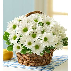 Spring flowers a blooming basket flowers gifts millersville md coming up daisies in millersville md a blooming basket flowers gifts mightylinksfo