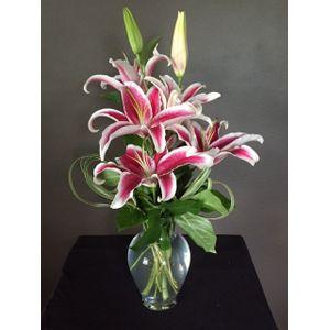Spring Hill Florist Wild Root Florist