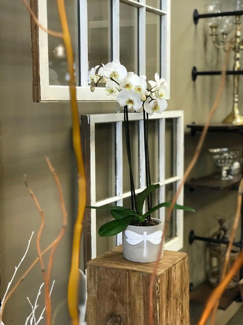 225 & Potted Orchid Ashland Florist: The Fuchsia Peony -Flower ...