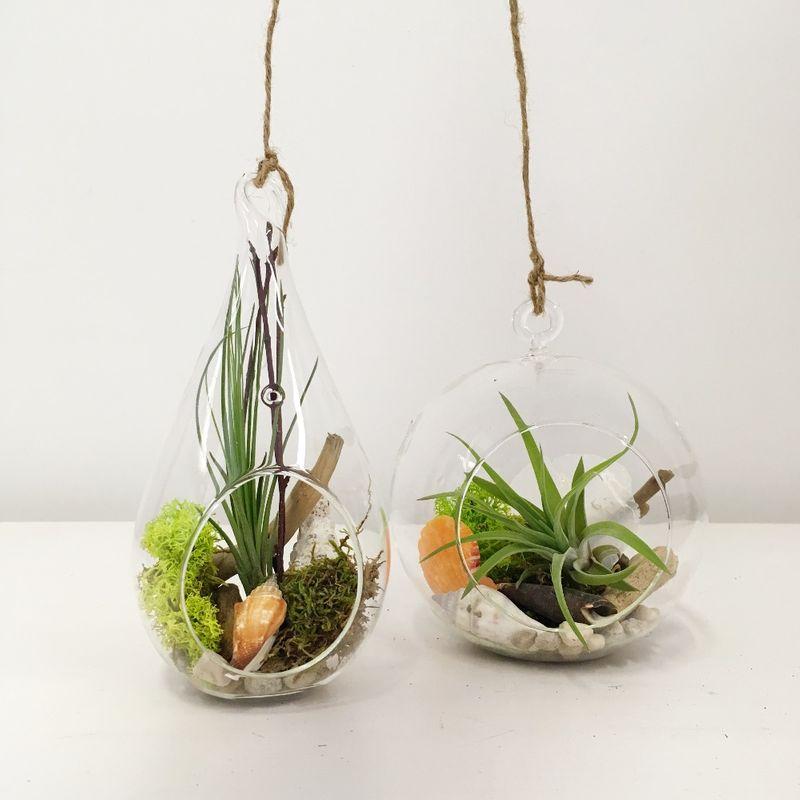 Small Medium Hanging Air Plant Terrarium Thuja Floral Design