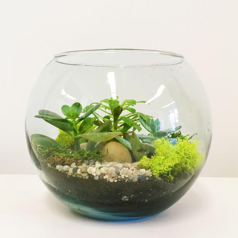 Succulent Terrarium Bowl Thuja Floral Design Thunder Bay Ontario