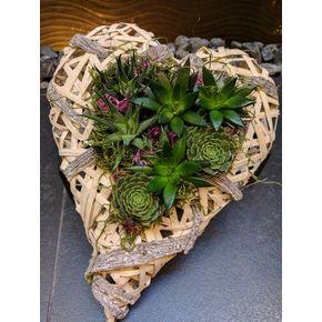 Succulent Garden In Seattle WA Trudys Floral Design