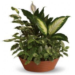 Plants Windsor Florist Daphne Alabama Florist