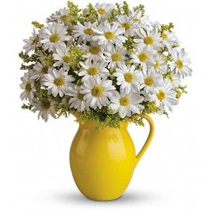 Sunny Day Pitcher of Daisies in Montgomery AL, Flowers By Buck