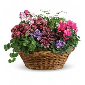 Simply Chic Mixed Plant Basket in Prudenville Mi, Posie Patch Florist & Gifts