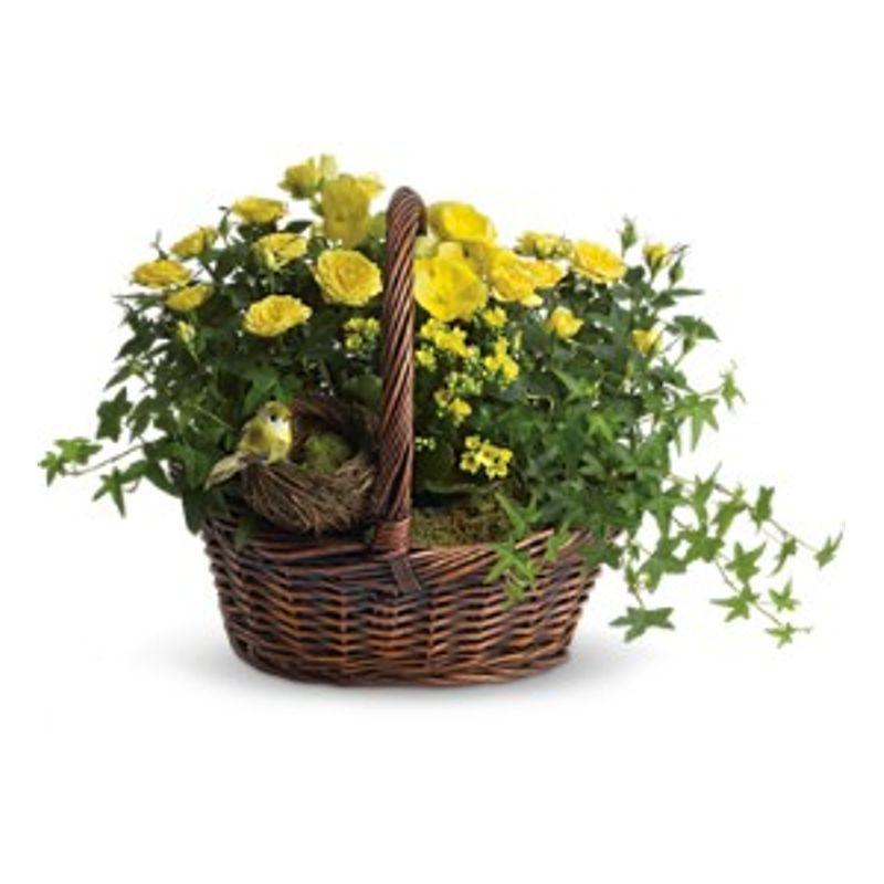 Yellow trio basket gray florists flowers gray me lady slipper more views mightylinksfo