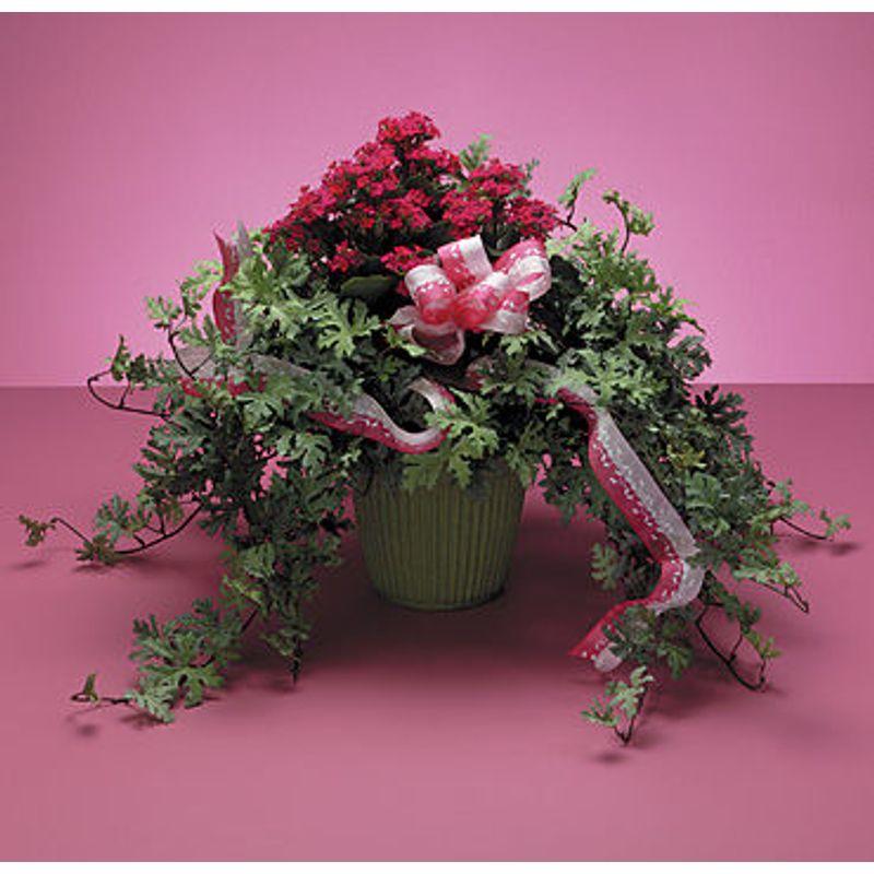 Kalanchoe And Ivy Fleur De Lis Florist Mountain View Ca Los Altos