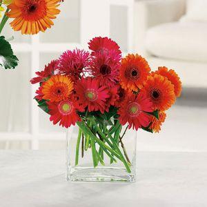 Charming Gerberas in Columbus OH, All InBloom Flowers