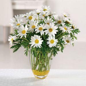 Daisy Daze in Columbus OH, All InBloom Flowers